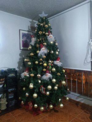 コロンビアクリスマスツリー昼
