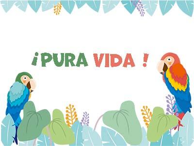 コスタリカの鳥つがい